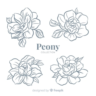 Beautiful collection of peony flowers in hand drawn style