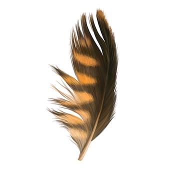 美しいカラフルな羽毛