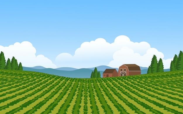 Красивая сельская местность с виноградниками