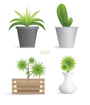 Beautiful decoration plants in flower pot