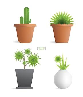 Красивые декоративные растения в цветочном горшке