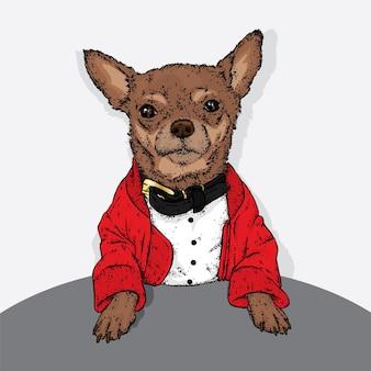 スタイリッシュな服を着た美しい犬