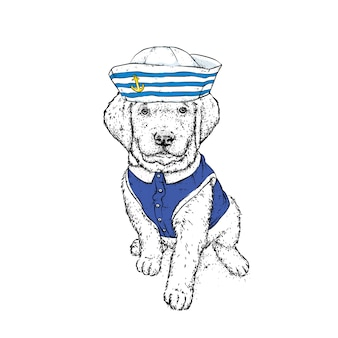 A beautiful dog in sailor clothes.  illustration.