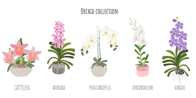 Beautiful flat style orchid flower collection on white