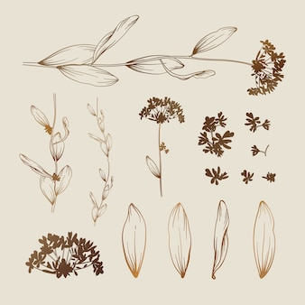 Beautiful floral background. elements for design
