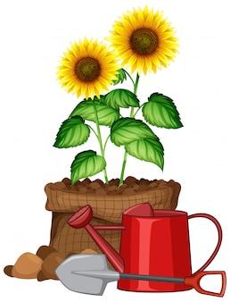Bello fiore in borsa marrone su fondo bianco
