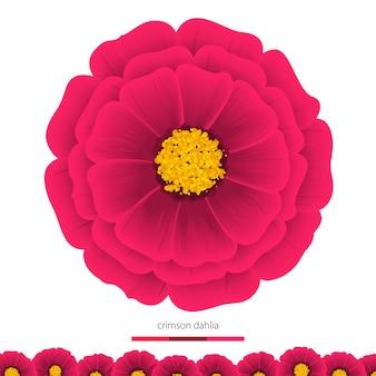 美しい花ダリア。デザインの要素。ベクトルイラスト。