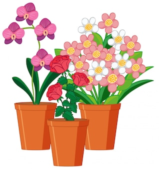 Beautiful flowers in the garden on white background
