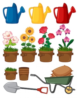 Beautiful flowers and gardening tools on white background