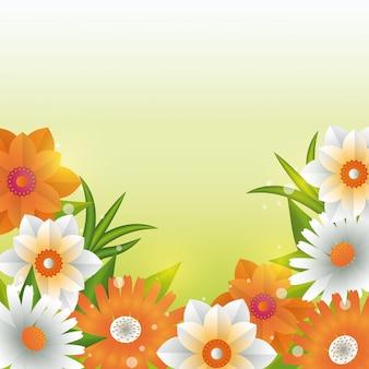 Красивые цветы зеленый фон