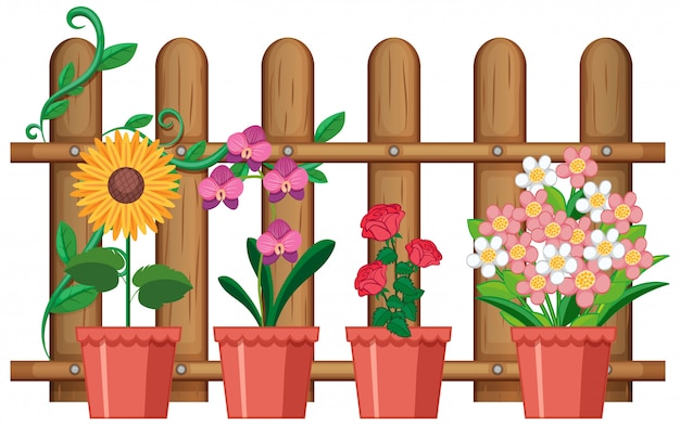 Beautiful flowers in pots on white background