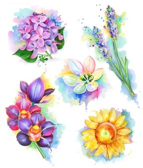 Beautiful flowers, watercolor painting, mesh   set