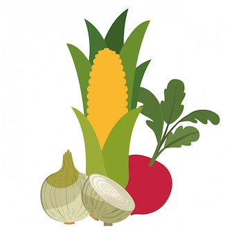 Beautiful fresh vegetables isolated icon