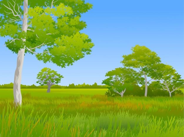Beautiful grass land