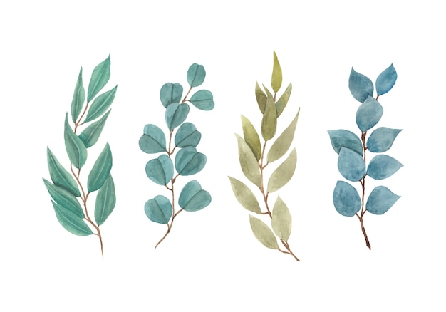 美しい緑のユーカリの葉