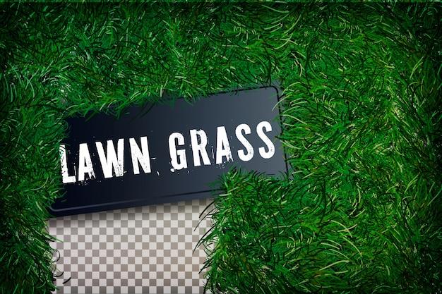 Beautiful green grassy field
