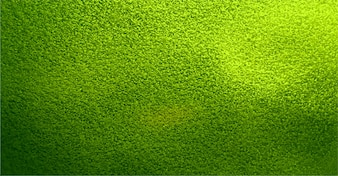 Beautiful green texture background