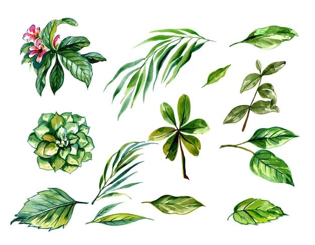 Beautiful green tropical leaves set design