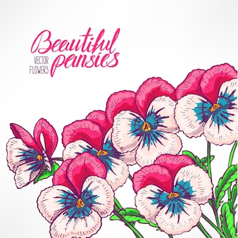 Beautiful greeting card with pretty pink pansies and place for text. hand-drawn illustration Premium Vector