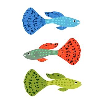 Beautiful guppy fish