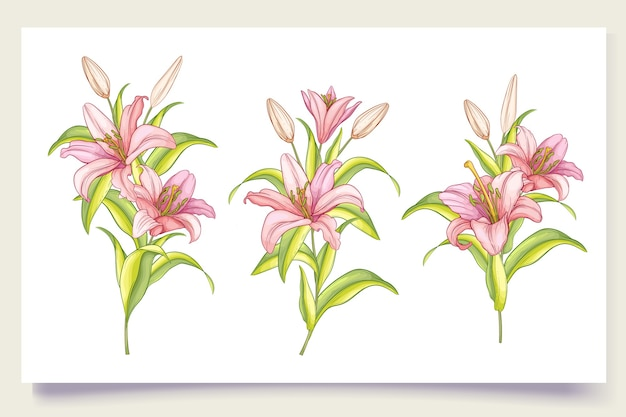 Beautiful hand drawn lily flowers illustration