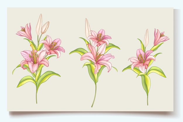 Beautiful hand drawn lily flowers illustration
