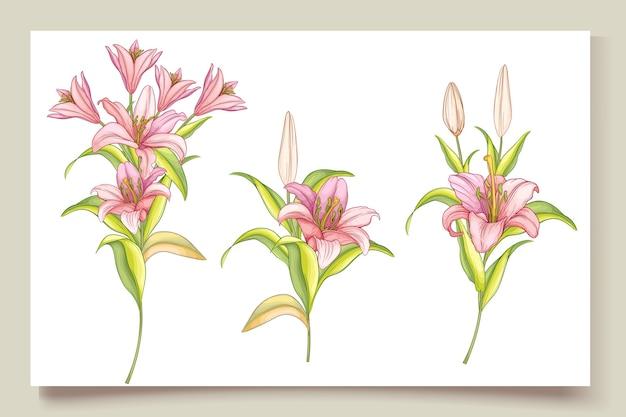 美しい手描きのユリの花のイラスト