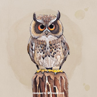 Beautiful hand drawn owl