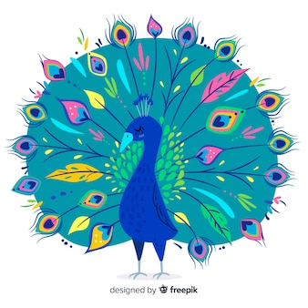 Beautiful hand drawn peacock