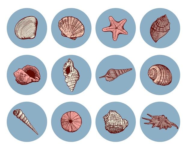 美しい手描きの貝殻アイコンセット。スケッチスタイルの貝殻マリンコレクション