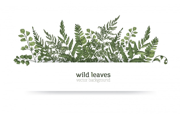 Beautiful horizontal background or banner decorated with gorgeous ferns, wild herbs or green herbaceous plants. elegant herbal backdrop or border. colorful realistic natural illustration