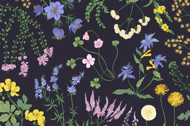 Beautiful horizontal botanical background with blooming wild flowers, summer meadow flowering herbs and herbaceous plants.
