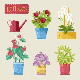 Beautiful house plants setlig