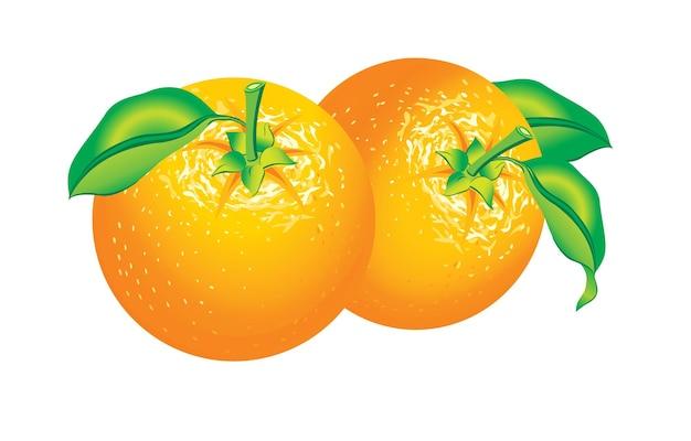 Красивая иллюстрация двух изолированных апельсинов
