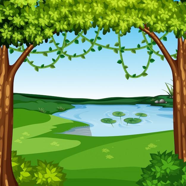 A beautiful jungle landscape