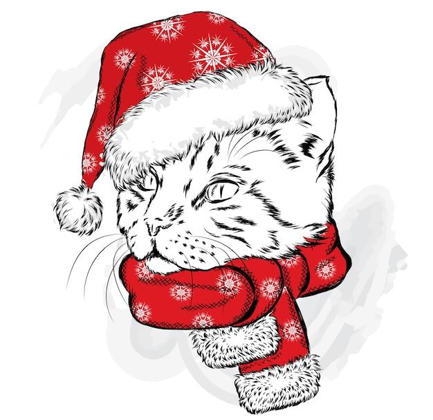 Красивый котенок в новогодней шапке и шарфе.