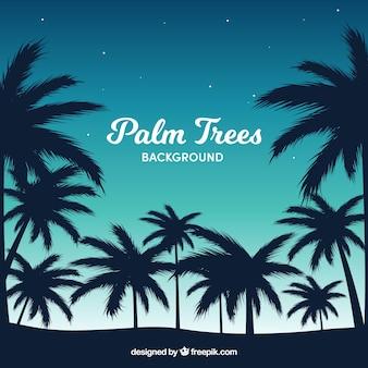 Beautiful landscape of palm trees backlit