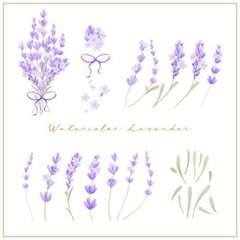美しいラベンダーの花の水彩画