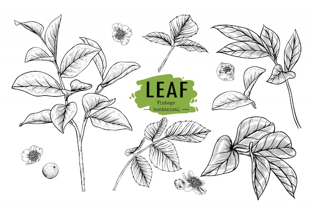 Beautiful leaf and flower drawings