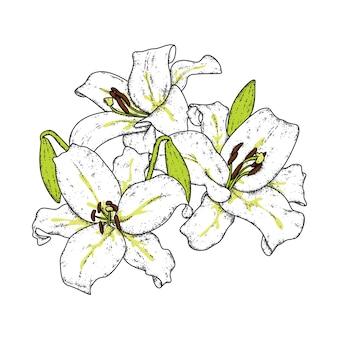 아름다운 백합. 섬세한 꽃