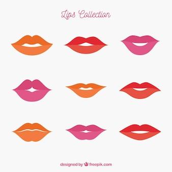 美しい唇のセット