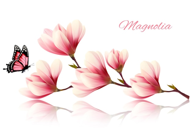Beautiful magnolia branch with a butterfly. vector.