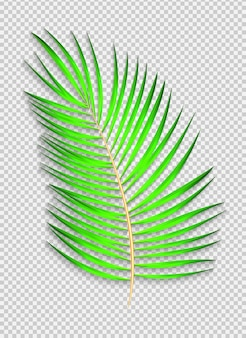 Beautiful naturalistic palm leaf on transparent background. vector illustration. eps10