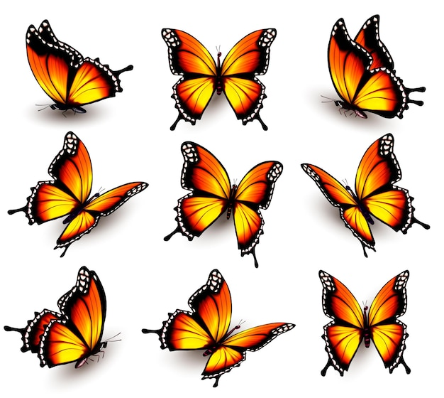 다른 위치에 아름 다운 오렌지 나비입니다. 벡터.
