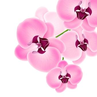 美しい蘭の花のイラスト