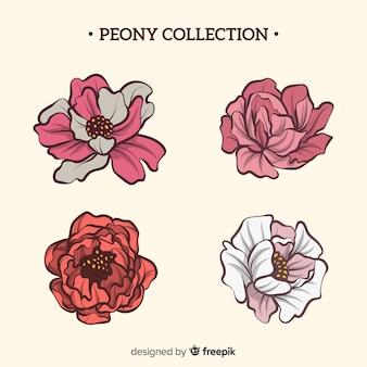 Beautiful pack of peony flowers