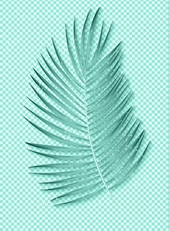 Beautiful palm leaf on transparent background.