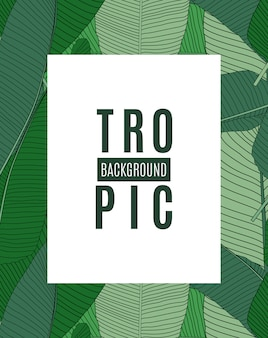 Beautiful palm tree leaf tropical silhouette background