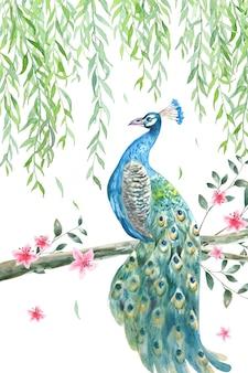 Красивый павлин с ветвью ивы и акварельным фоном цветения персика.