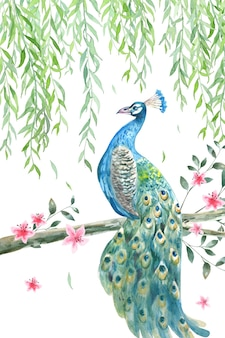 Beautiful peacock with willow branch and peach blossom watercolor background.